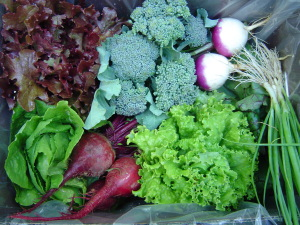 Early Season CSA